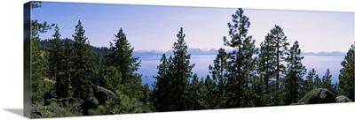 Trees near a lake, Lake Tahoe, California