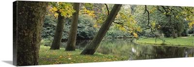 Trees near a pond in a park, Vondelpark, Amsterdam, Netherlands