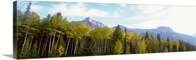 Trees on a field, Icefields Parkway, Canadian Rockies, Jasper National Park, Alberta, Canada