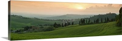 Trees on a hill, Monticchiello Di Pienza, Val d'Orcia, Siena Province, Tuscany, Italy