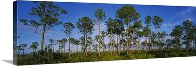 Trees on a landscape, Everglades National Park, Florida