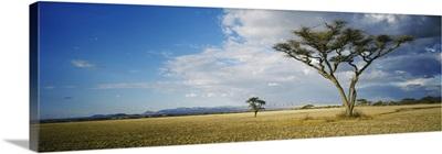 Trees on a landscape, Tanzania