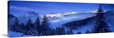 Trees on a polar landscape, Simplon Pass, Switzerland