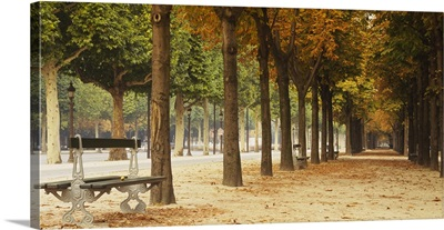 Trees on both sides of a walkway, Champs Elysees, Paris, France