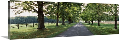Trees on the both sides of a road, Knox Farm State Park, East Aurora, New York State