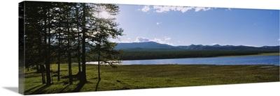 Trees on the lakeside, Lake Khuvsgul, Independent Mongolia
