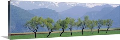 Trees Pyrenees Spain
