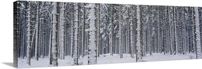 Trees Winter Austria