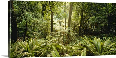 Tropical forest N Isl New Zealand