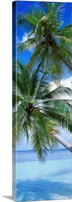 Tropical Island Indian Ocean Maldives