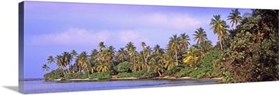 Tropical trees on the beach, Maldives
