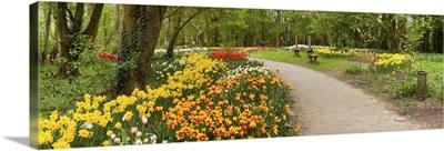 Tulips in a garden, Springfields Garden, Lincolnshire, England