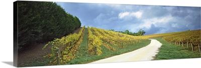 Vineyard, Adelaide Hills, South Australia, Australia