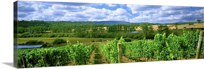 Vineyard, Launceston, Tasmania, Australia