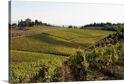 Vineyard, Route 429, Chianti Region, Tuscany, Italy