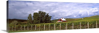 Vineyard, Wine Country, Napa Valley, California