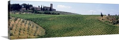 Vineyards and Olive Grove outside San Gimignano Tuscany Italy