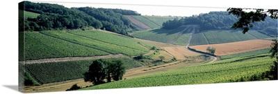 Vineyards Chablis France