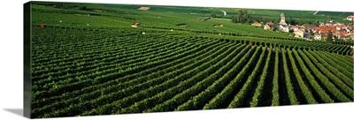 Vineyards Oger Champagne France