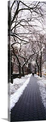 Walkway in a park, Central Park, Manhattan, New York City, New York