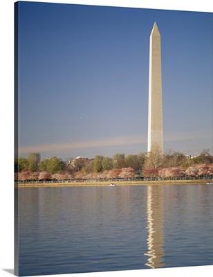 Washington Monument with cherry blossoms, Washington DC