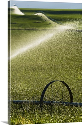 Water spraying from irrigation sprinklers on green farmland hills, selective focus close up, Montana