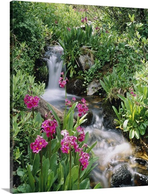 Waterfall CO