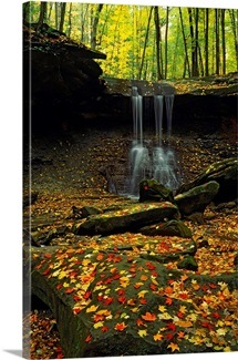 Waterfall in a forest, Blue Hen Falls, Cuyahoga Valley National Park, Ohio