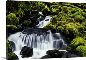 Waterfall Over Mossy Rocks Olympic National Park