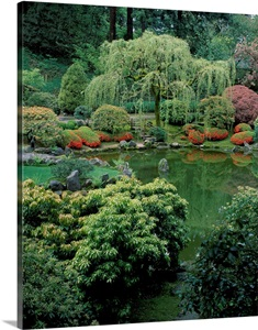 Weeping Willow Tree And Pond In A Japanese Garden