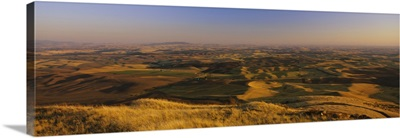 Wheat field on a landscape, Palouse Region, Whitman County, Washington State