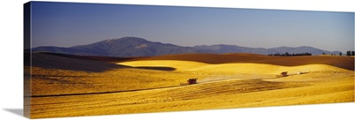 Wheat Field WA