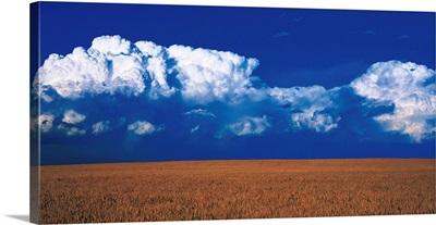 Wheat Field Weld Co CO