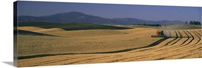 Wheat Fields Palouse Country WA