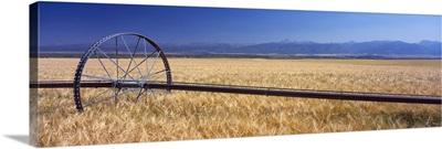 Wheat Teton Valley ID