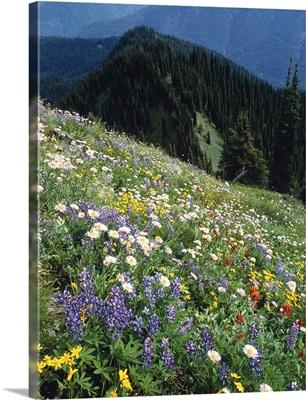 Wild Flowers, British Columbia, Canada