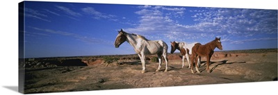 Wild Ponies NM