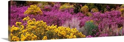 Wildflowers El Prado NM