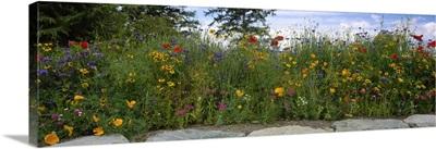 Wildflowers growing near a stone wall, Fidalgo Island, Skagit County, Washington State