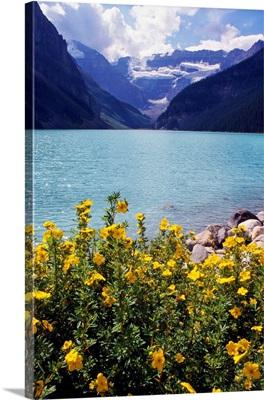 Wildflowers in bloom, Lake Louise, Alberta, Canada.