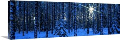 Winter Forest Sunburst