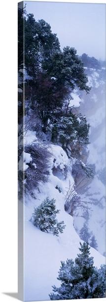 Winter Snow Storm Grand Canyon Rim AZ
