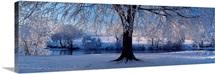 Winter Trees Perkshire Scotland