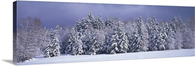 Winter Trees Waterbury VT