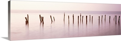 Wooden post in a river, Port Mahon Fishing Pier, Port Mahon, Delaware River, Delaware