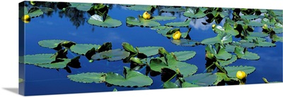 Wyoming, Pond with lily pads