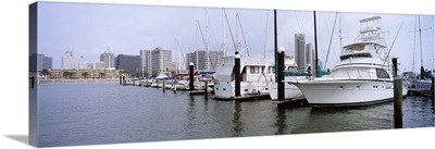 Yachts at a harbor with buildings in the background, Corpus Christi, Texas