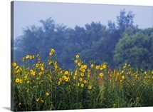 Yellow Wildflowers In Bloom