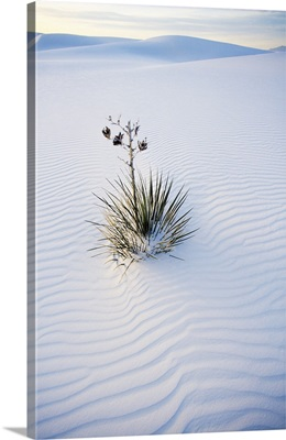 Yucca Plant In Sand Dune