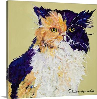 Maxie Cat